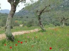 Spring flowers in the Serra de Aire e Candeeiros