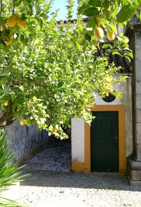 Lemon trees, sunshine and old houses in an Evora backstreet