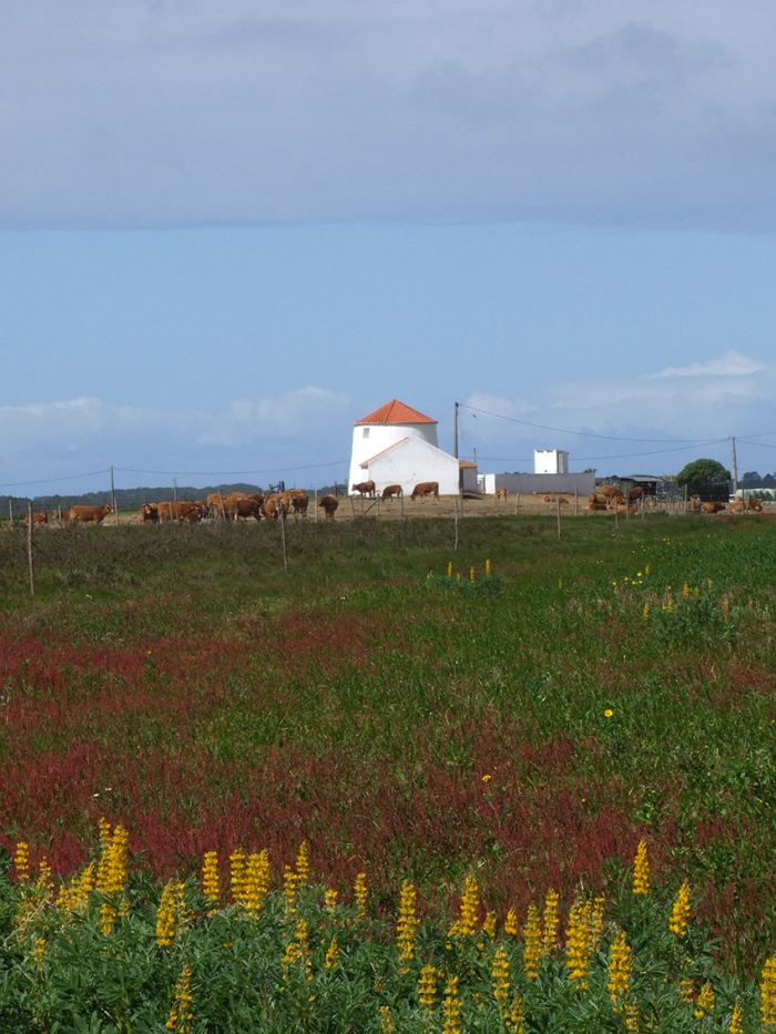 Scenery north of Zambujeira do Mar